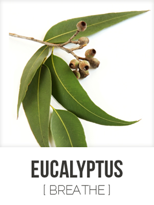 EUCALYPTUS [ BREATHE ]